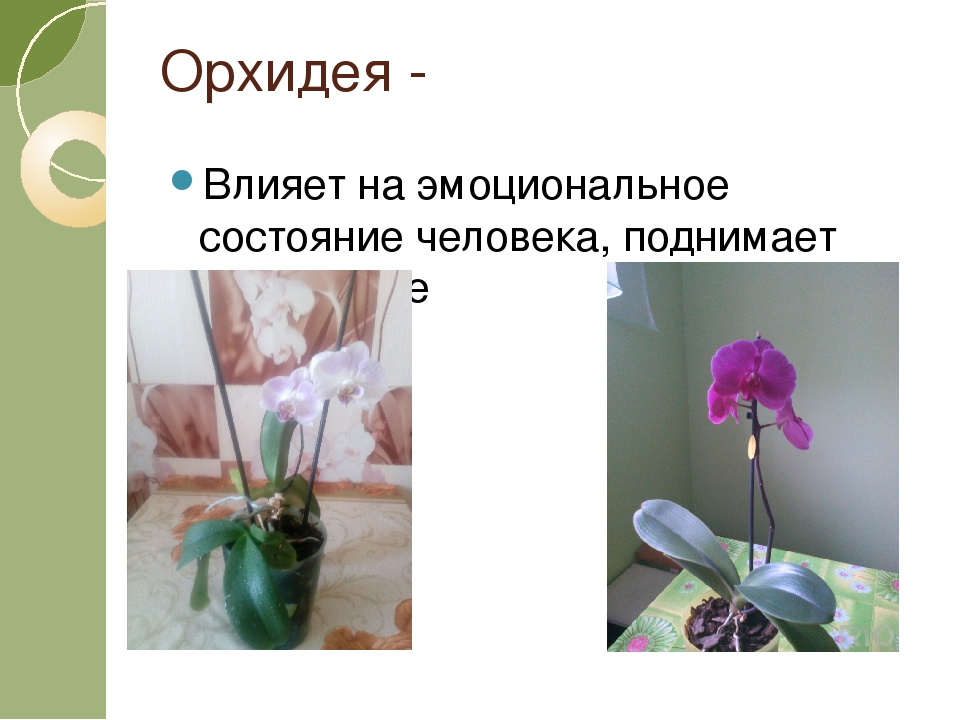 Орхидея - Влияет на эмоциональное состояние человека, поднимает настроение
