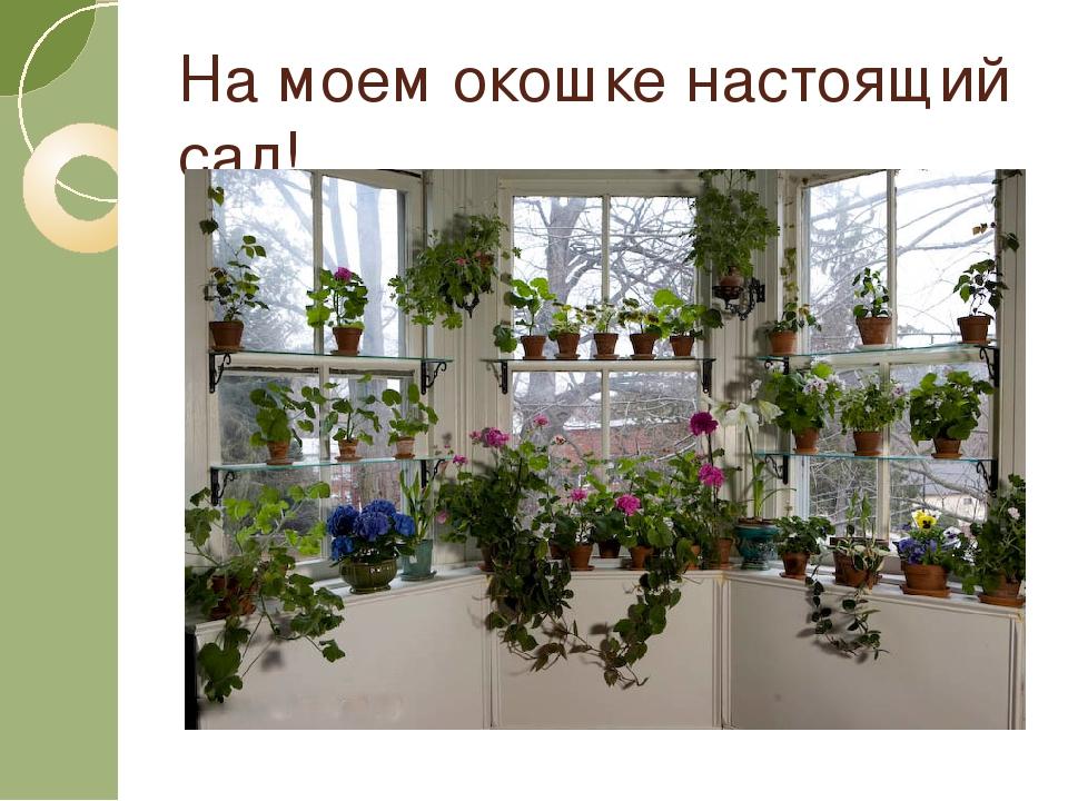 На моем окошке настоящий сад!