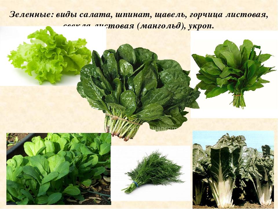 территории виды листьев салата с названием вас мучает жажда