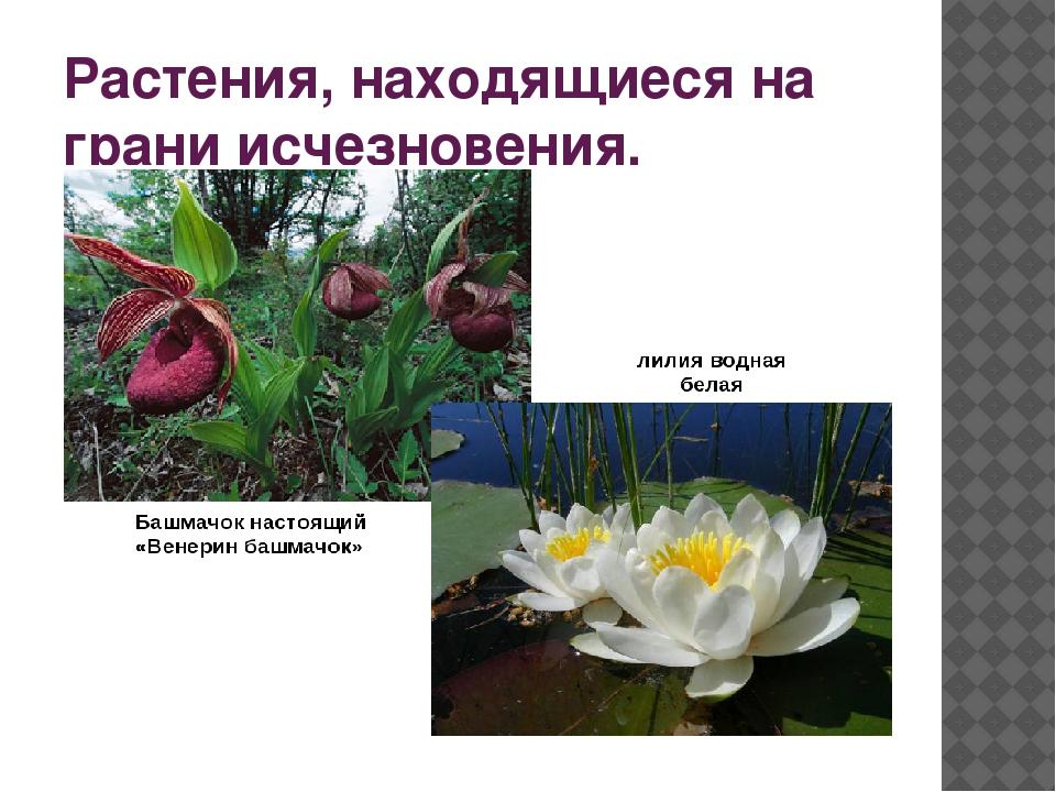 Исчезающие растения в картинках