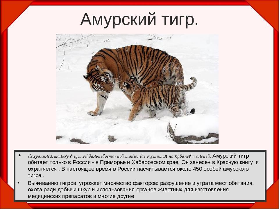 предлагается амурский тигр картинка с описанием сайте собраны лучшие