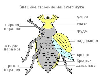 картинки части к майскому жуку все эти фильтры
