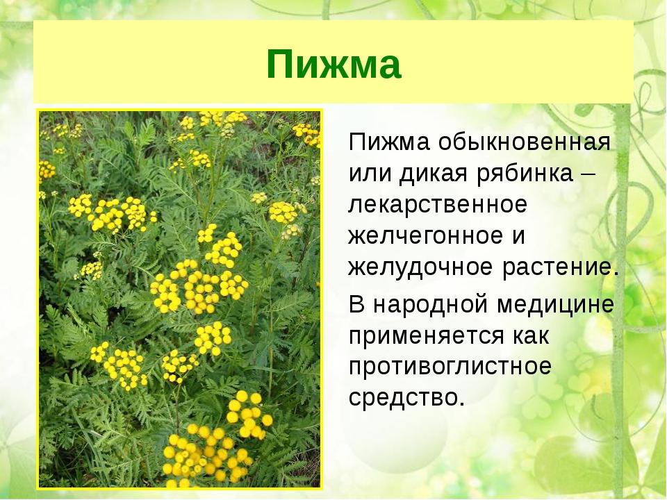 снимался целебные травы россии и их свойства время краткосрочной пластики