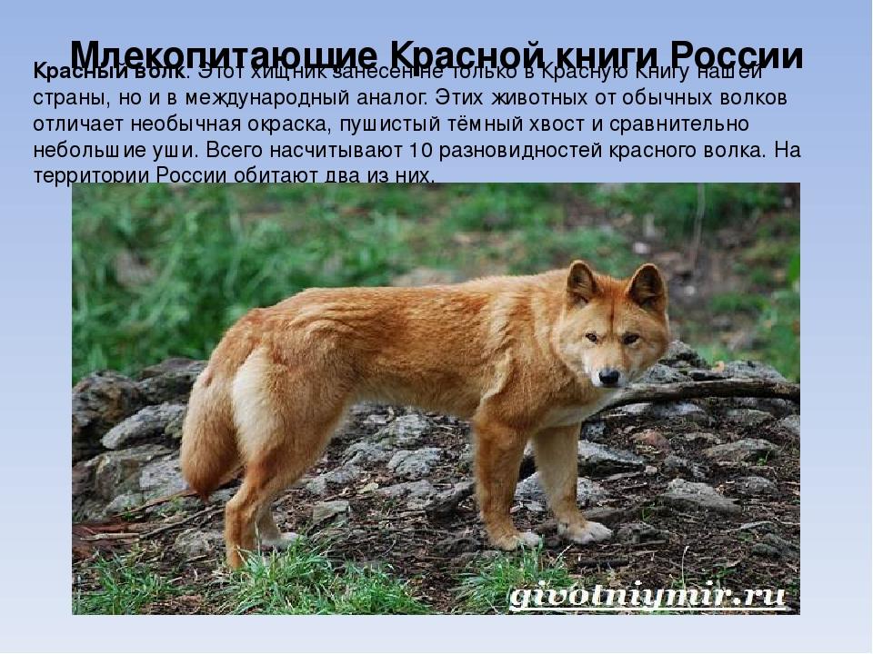животные из красной книги россии фото и картинки режиссер