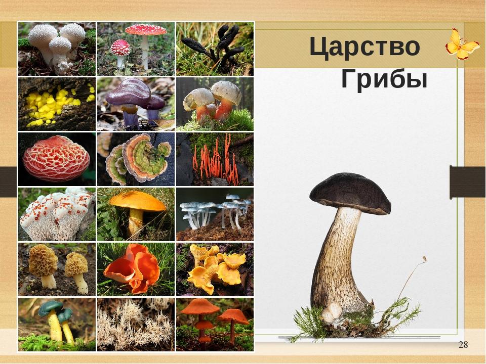 Презентация на тему грибы 5 класс фгос
