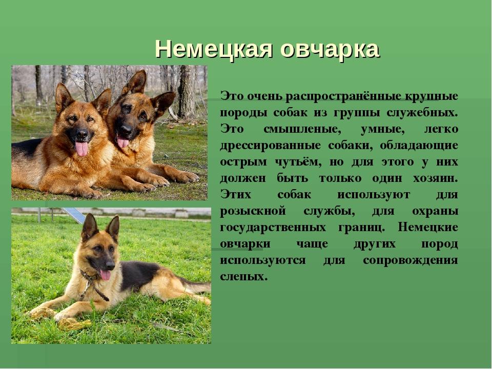 описание собаки фото