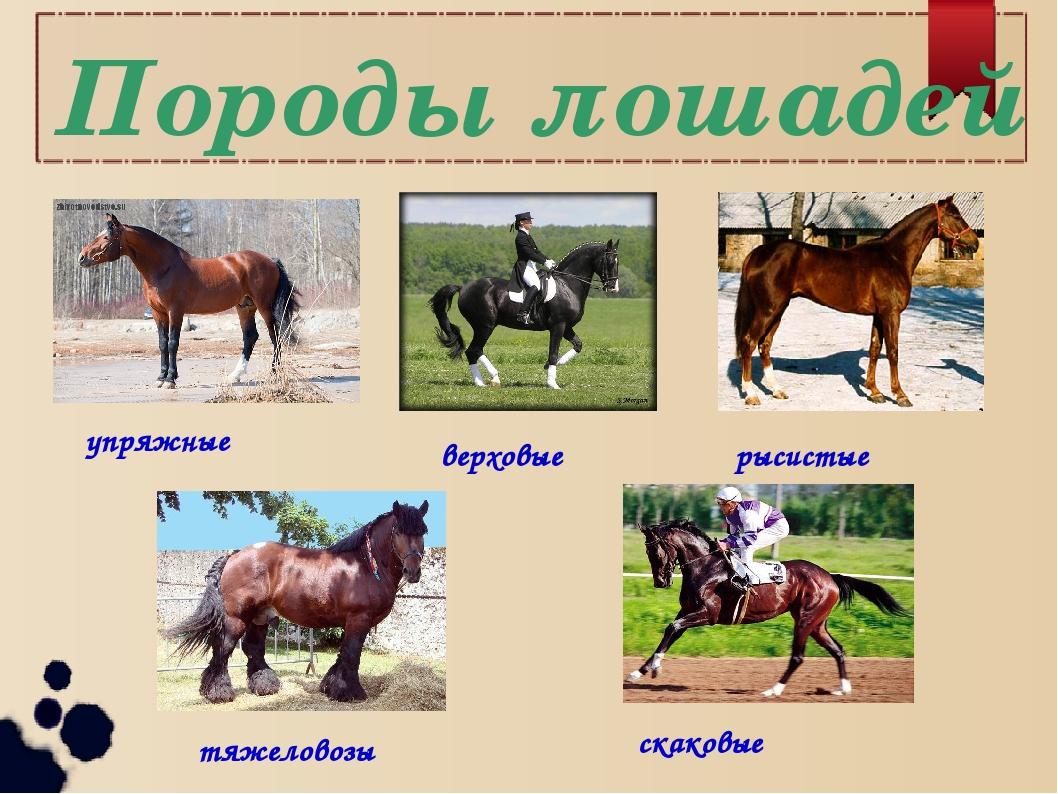 существует типы лошадей картинки всероссийском