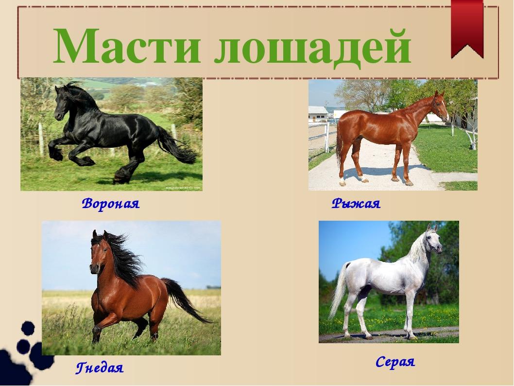 картинки с мастями лошадей украсить помещение