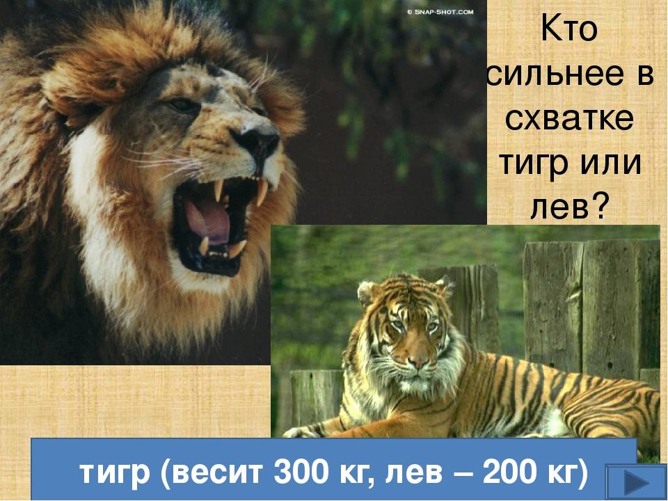 Убивают эти кошки также одинаково, впиваясь клыками в шею жертвы.