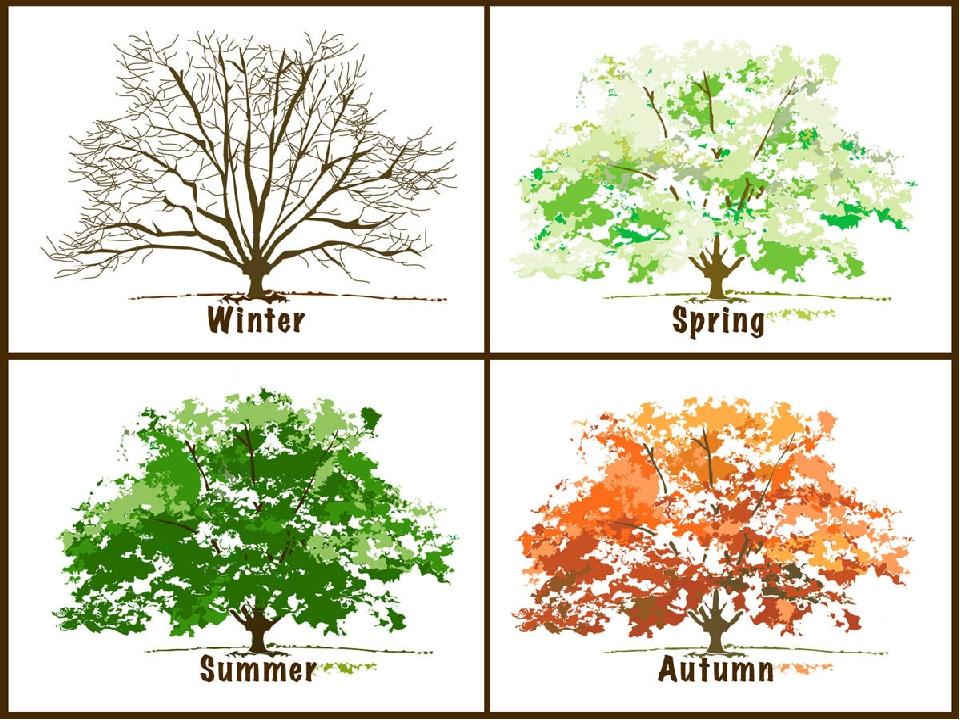 Деревья в картинках на английскому