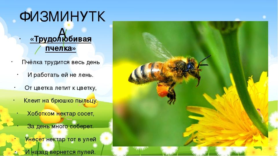 загадки картинки о пчелах керамика