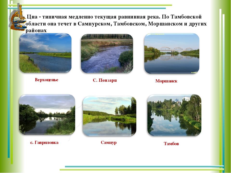 Цна - типичная медленно текущая равнинная река. По Тамбовской области она те...