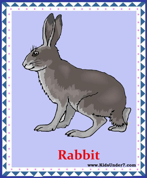 Rabbit перевести на русский