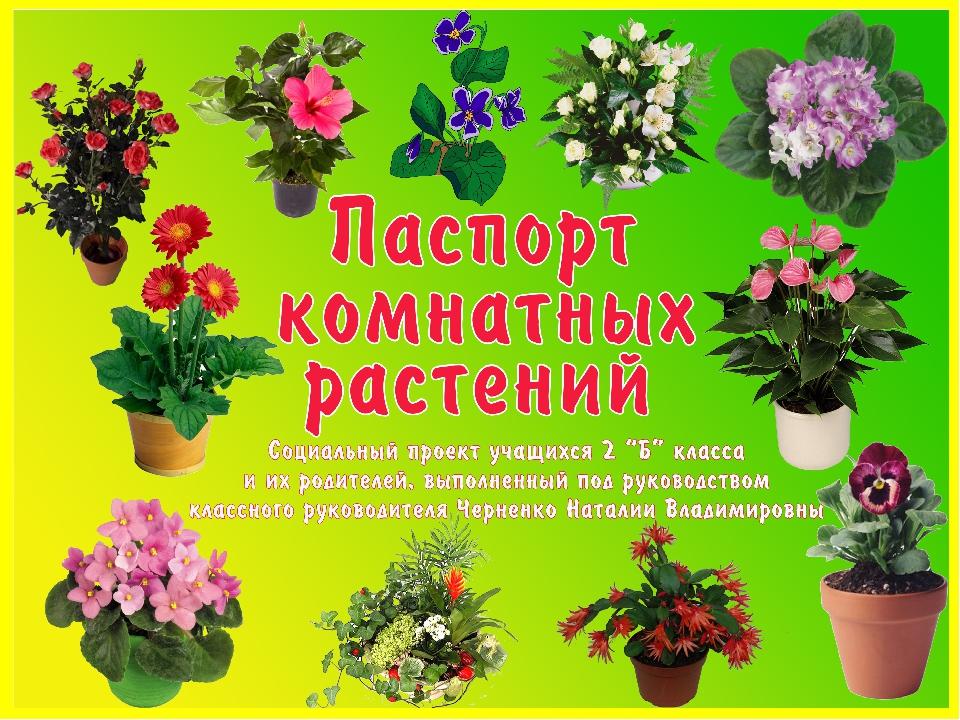 комнатные растения для старшей группы картинки кети