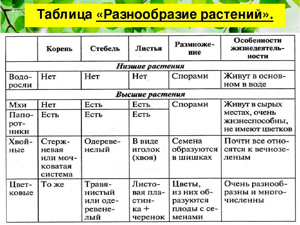 Царства растений отделов признаки основных гдз характерные