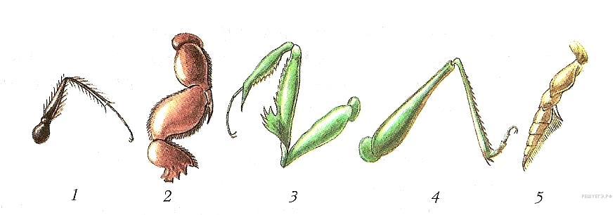 бесстебельное, типы конечностей насекомых картинки монолитном доме