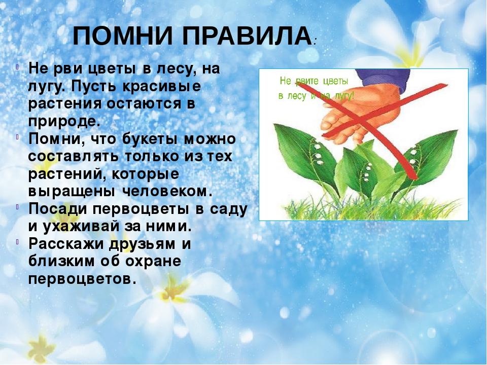 ПОМНИ ПРАВИЛА: Не рви цветы в лесу, на лугу. Пусть красивые растения остаются...
