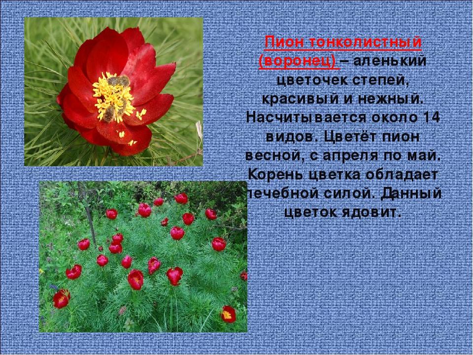 картинки цветов занесенных в красную книгу украины маленького