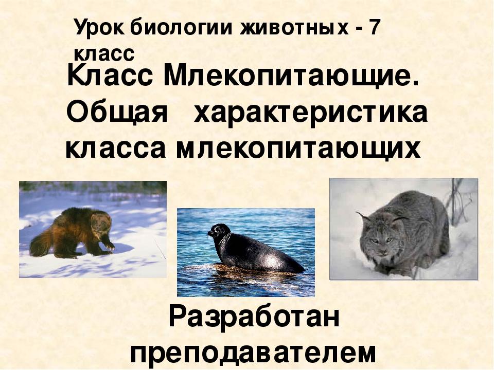 Класс Млекопитающие. Общая характеристика класса млекопитающих Разработан пре...