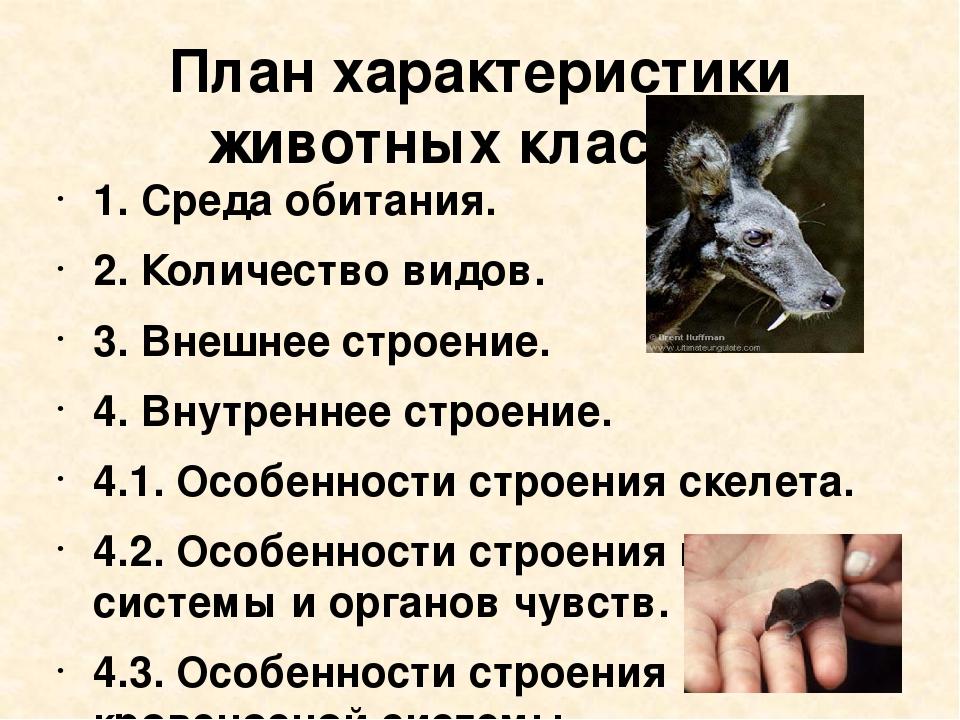 План характеристики животных класса: 1.Среда обитания. 2.Количество видов....