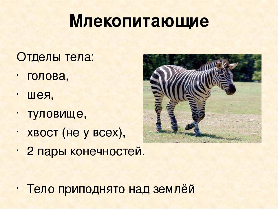 Млекопитающие Отделы тела: голова, шея, туловище, хвост (не у всех), 2 пары к...