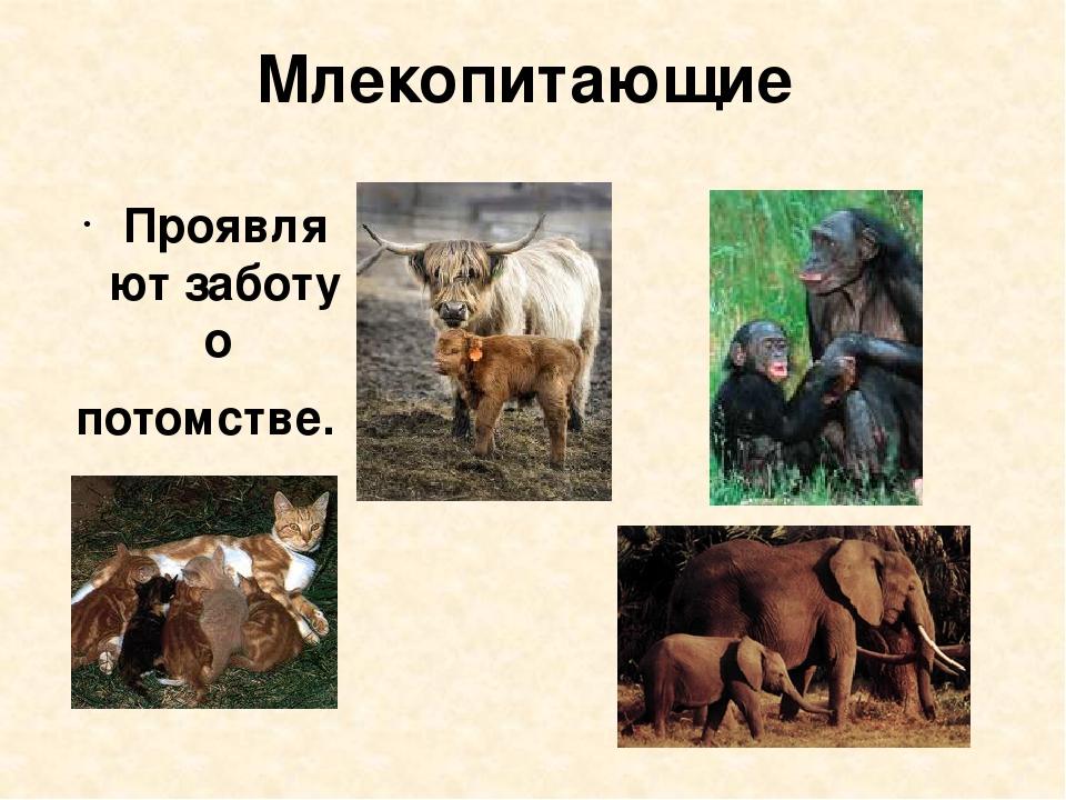 Млекопитающие Проявляют заботу о потомстве.