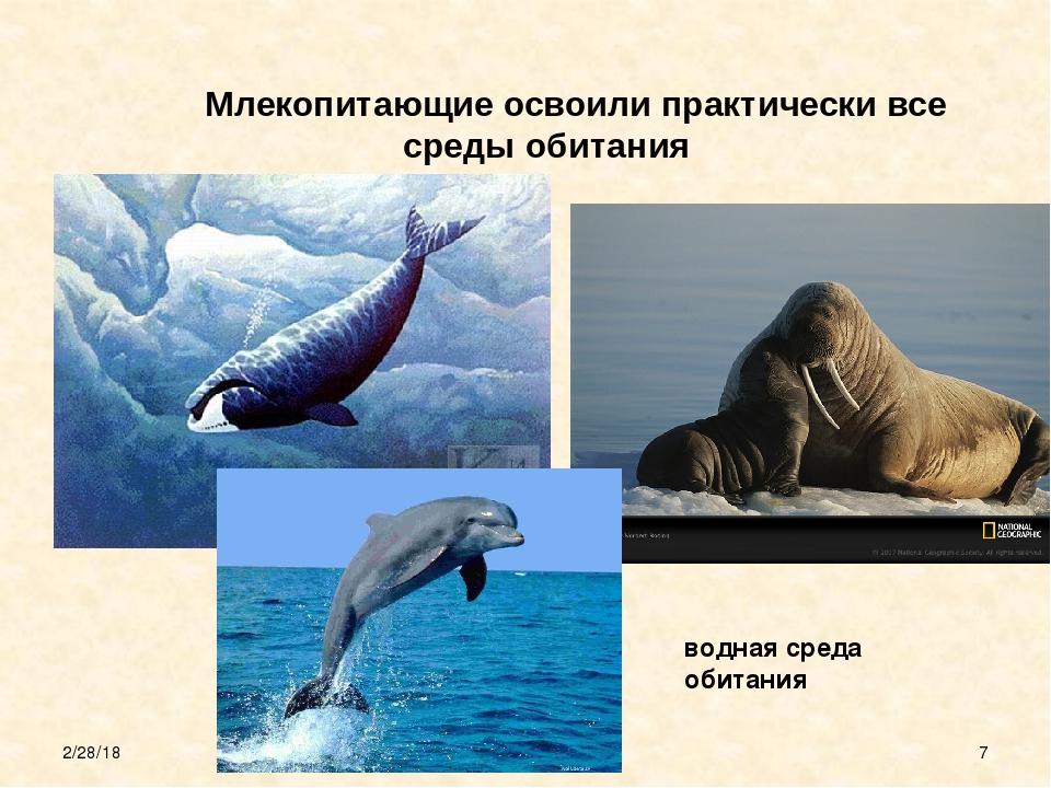 Млекопитающие освоили практически все среды обитания водная среда обитания