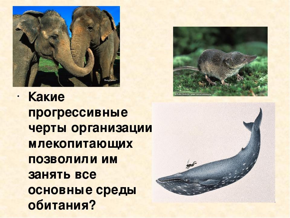 Какие прогрессивные черты организации млекопитающих позволили им занять все о...