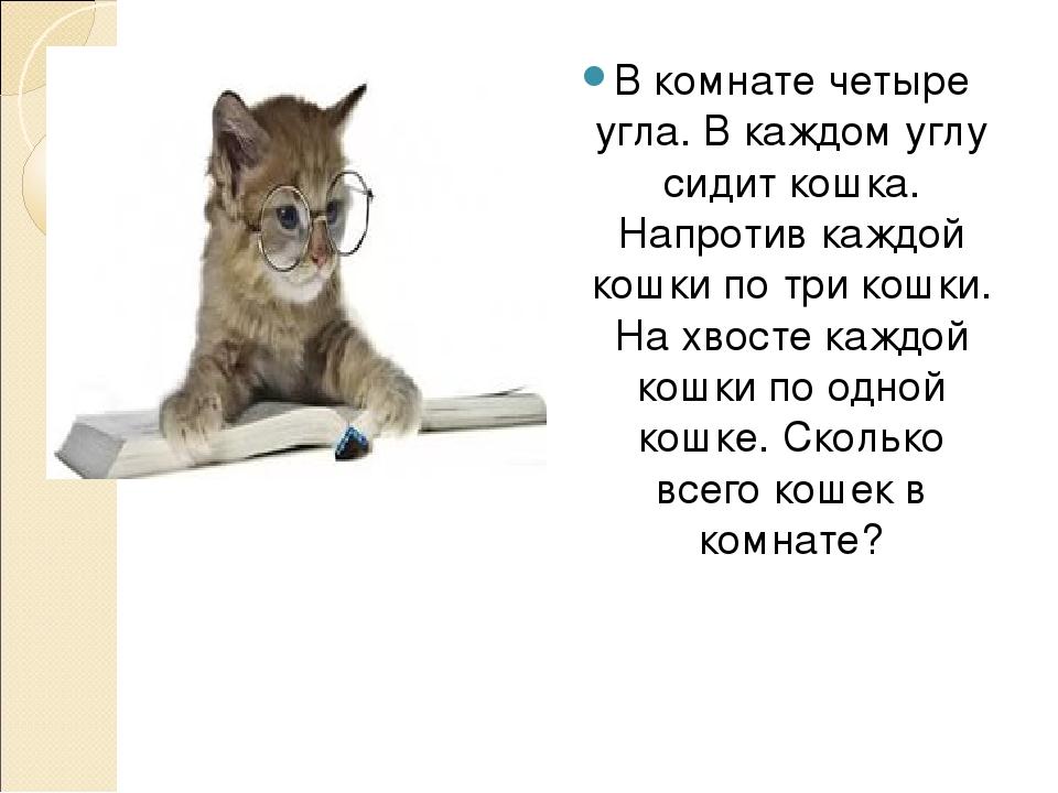одной загадка про кошек в комнате режиссера ирина экономист