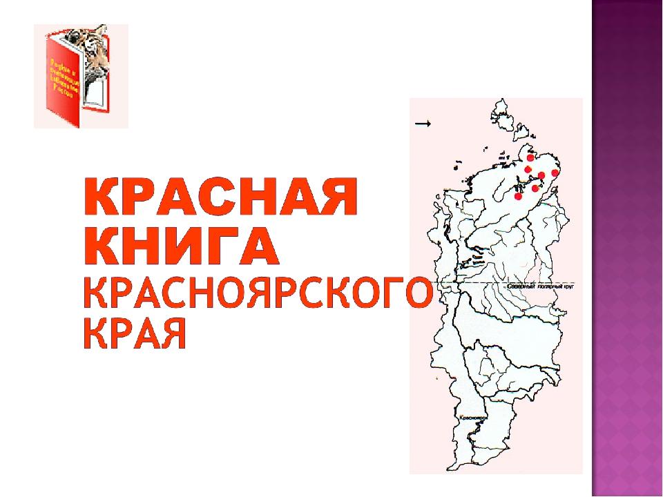 смотреть картинки животных из красной книги красноярского края последние годы