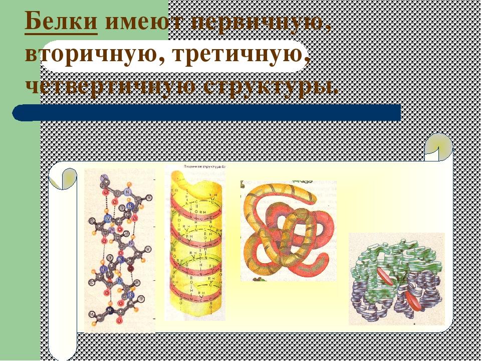Белки имеют первичную, вторичную, третичную, четвертичную структуры.