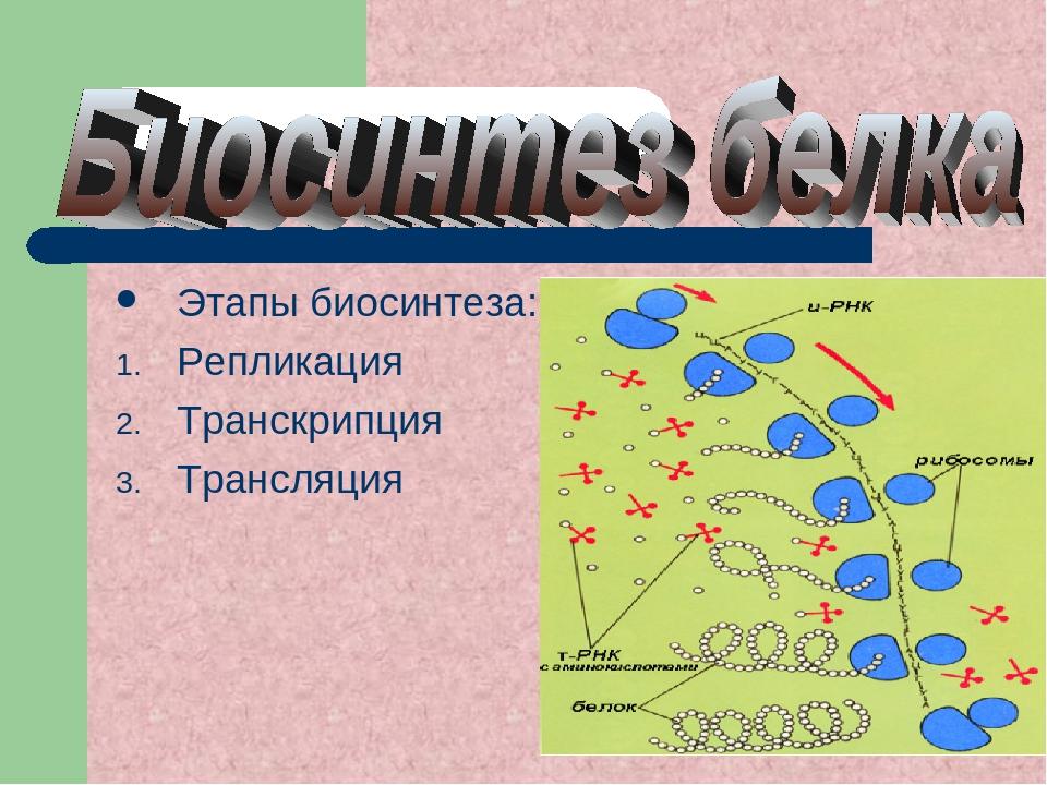 Этапы биосинтеза: Репликация Транскрипция Трансляция