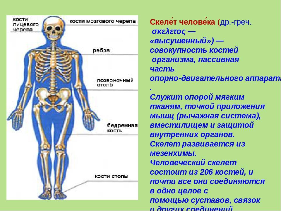вообще если кости скелета человека фото с описанием изготовленный