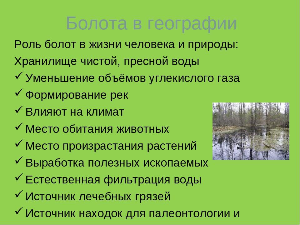 Природное сообщество болото доклад