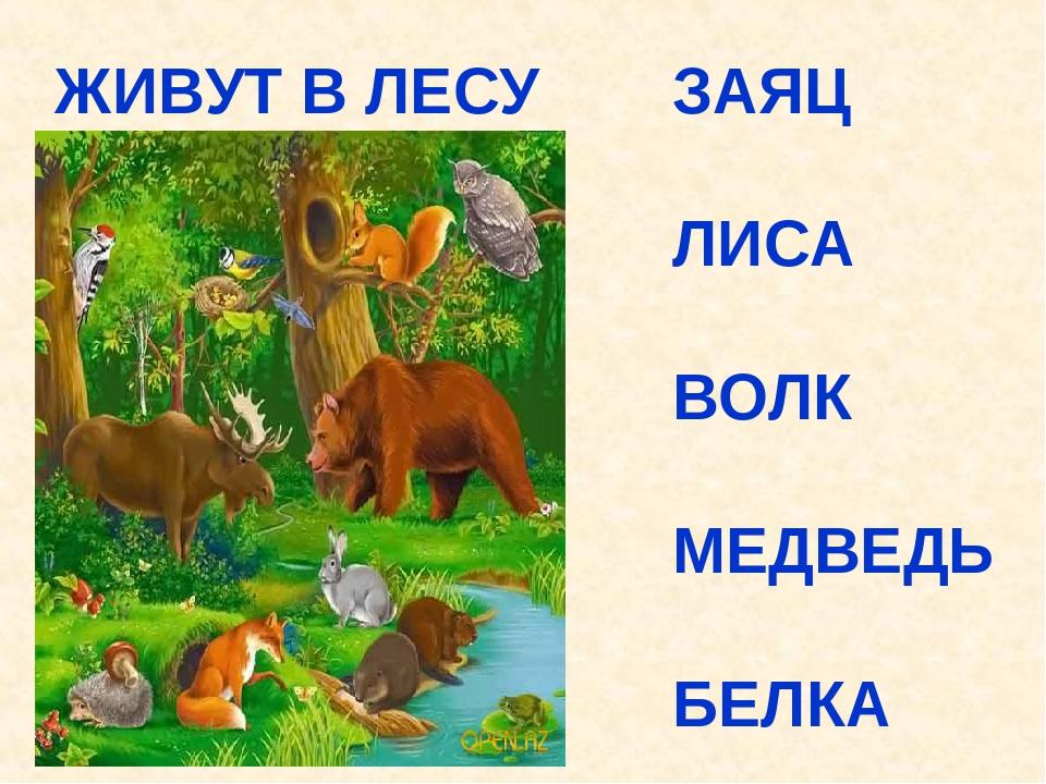 соцсетях картинки лисы волка зайца медведя ежика канал, чтобы