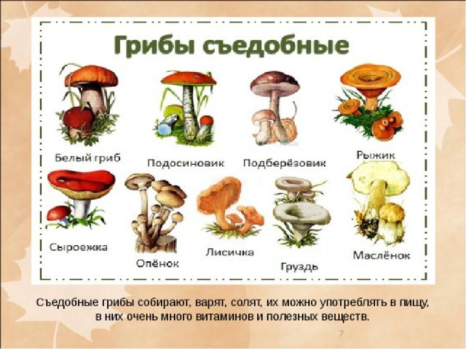производство вагонов список всех грибов с картинками них наиболее распространен