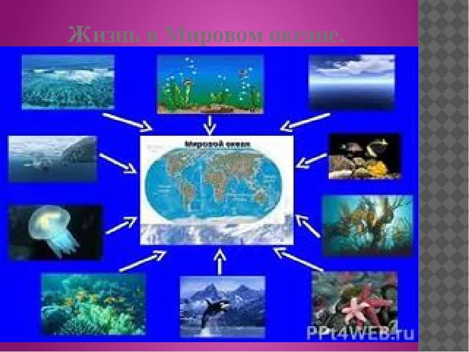 Жизнь в Мировом океане.