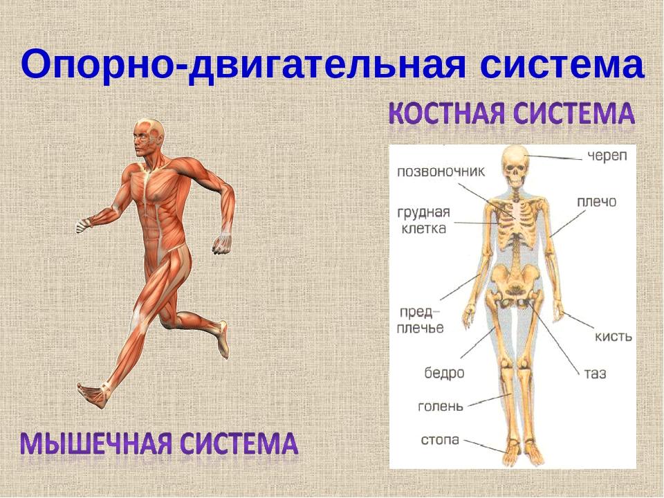 Контрольная по окружающему организм человека
