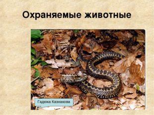 Охраняемые животные Благородный олень Зубр Серна Медведь Лисица Гадюка Казнак