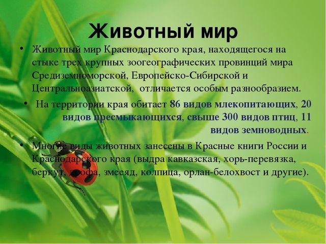 Животный мир Животный мир Краснодарского края, находящегося на стыке трех кру...