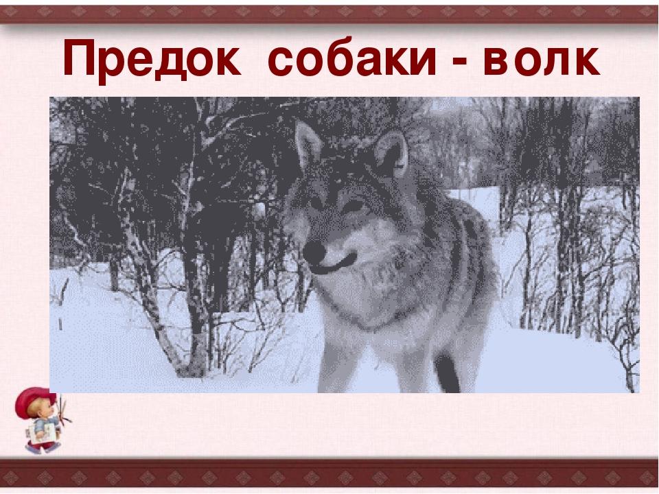 Gif волк