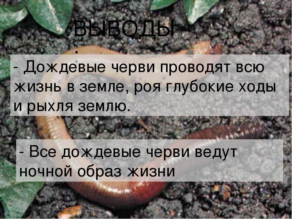 ВЫВОДЫ: - Дождевые черви проводят всю жизнь в земле, роя глубокие ходы и рыхл...