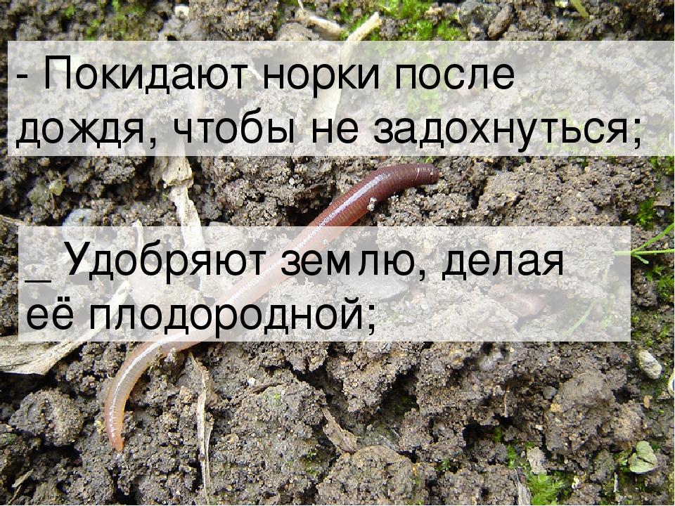 - Покидают норки после дождя, чтобы не задохнуться; _ Удобряют землю, делая е...