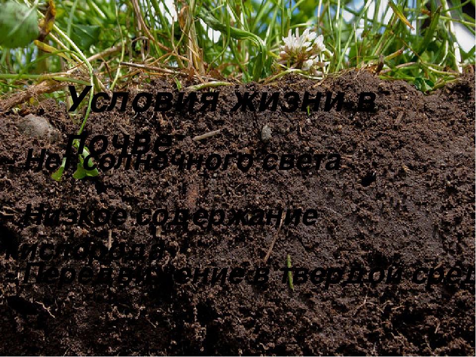 Условия жизни в почве: - Нет солнечного света - Низкое содержание кислорода -...