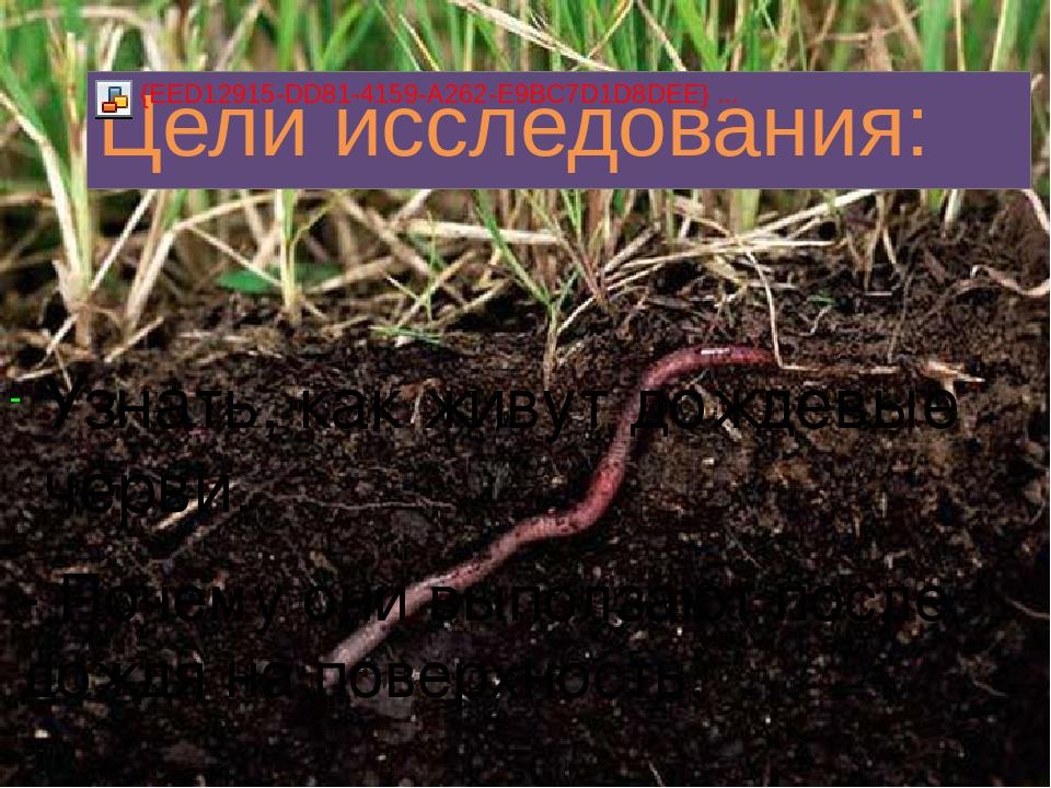 Узнать, как живут дождевые черви. - Почему они выползают после дождя на повер...