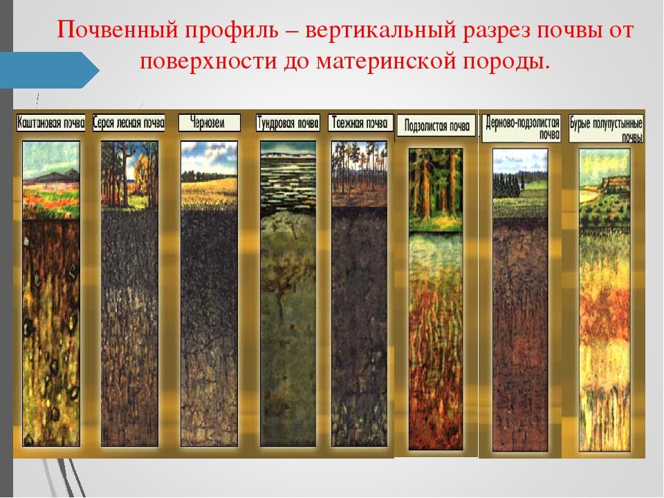 картинки с профилями почв диода