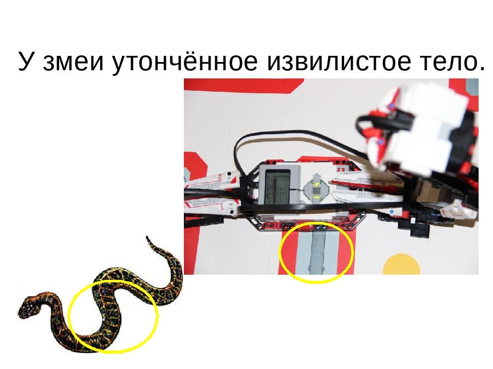 У змеи утончённое извилистое тело.