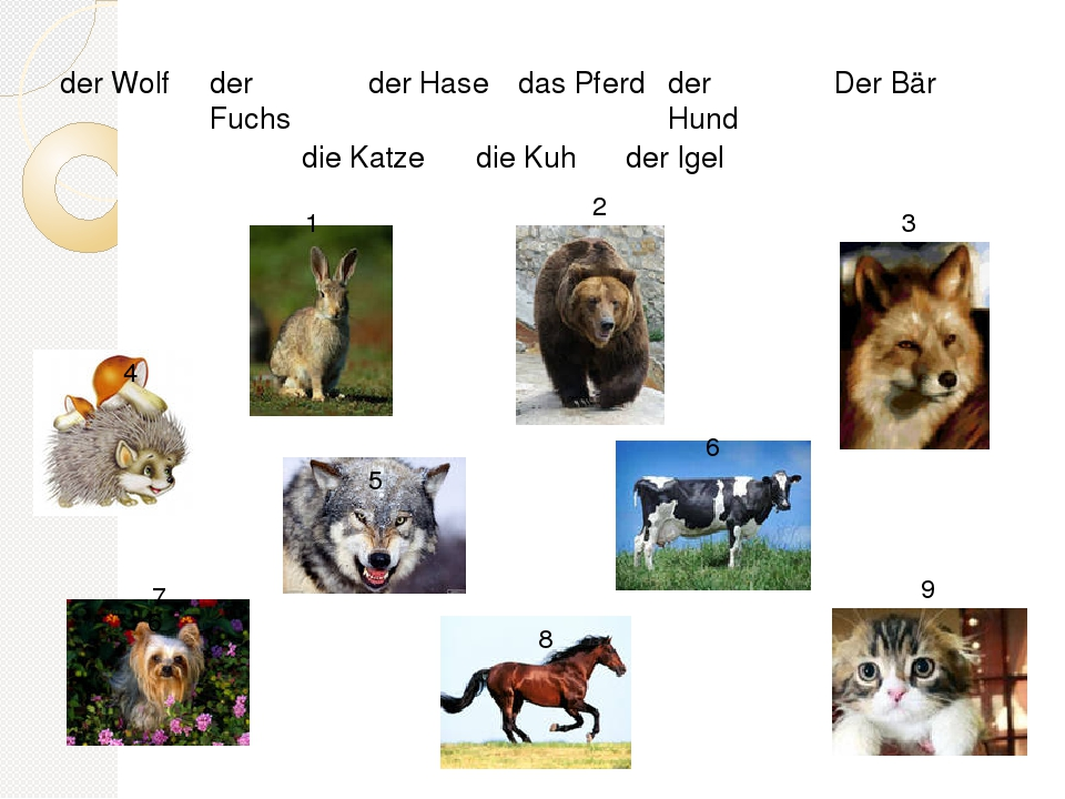 любом постер про животных на немецком пол это современное