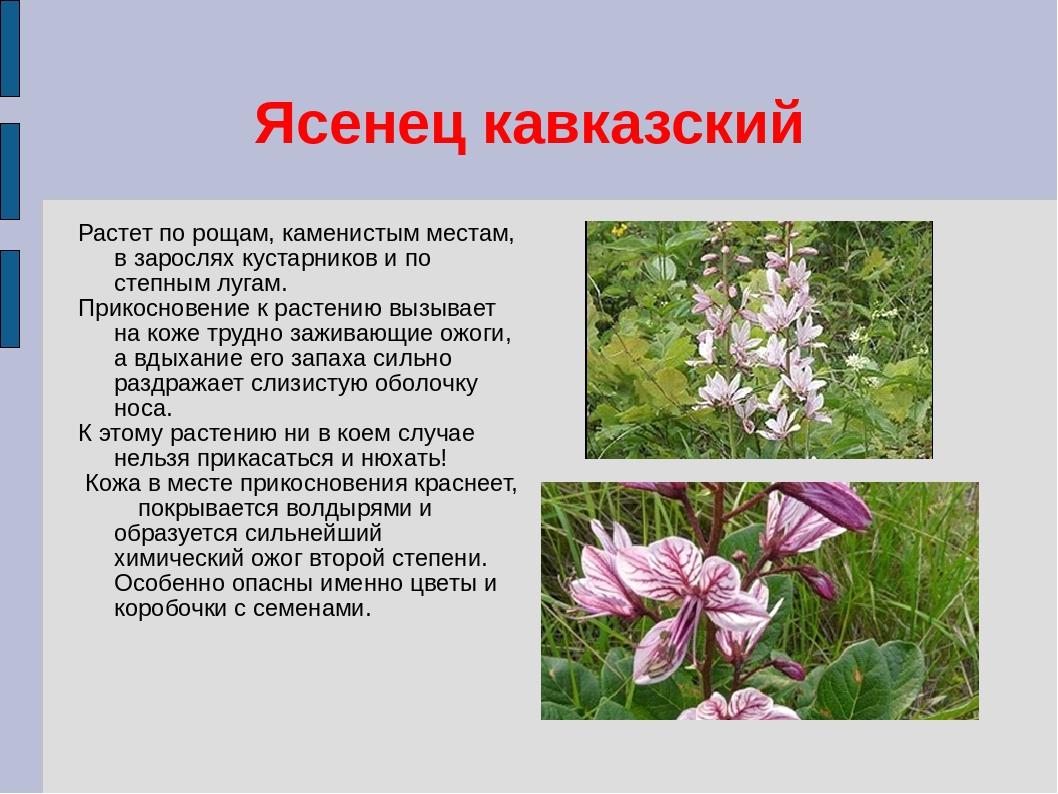 влюблен ядовитые растения краснодарского края с картинками домики