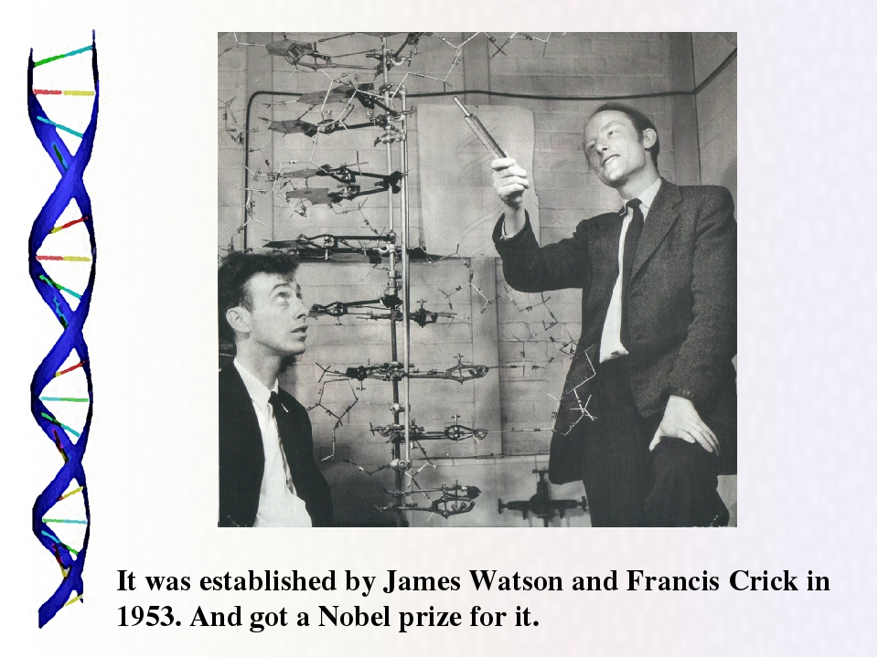 watson and crick essay View essay - watson and crick paper from physiology 3200, 1240 at wayne state university julianna barjaoui eu5051 watson and crick paper 1 watson and crick think that the dyad, formed by.